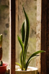 Indoor Plants for Tiny Homes